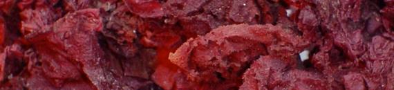 Gelidium - Alghe rosse