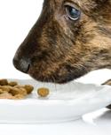 Integratori alimentari per animali
